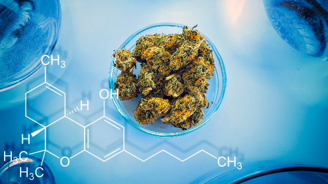 Opportunities for Mass Spectrometry in the Cannabis Industry