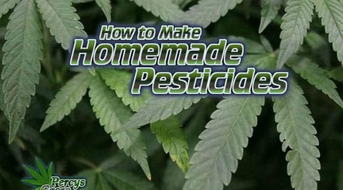 Why We Should Ban All Pesticide Use on Cannabis Plants