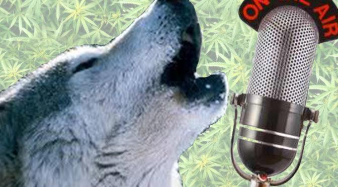 Tim Seymour, Guy Adami & The Wolf Discuss Marijuana Stocks & Pop Culture