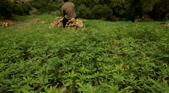 Morocco: Cannabis farmers hopeful of legalisation for medical use