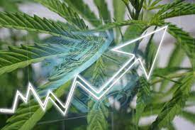 Four Cannabis Stocks for the Summer of 2021