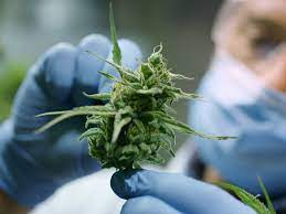 UK's Kanabo to buy Canadian cannabis producer Materia